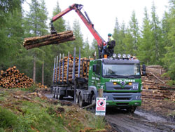 Forestry Operations at Seafield Estate